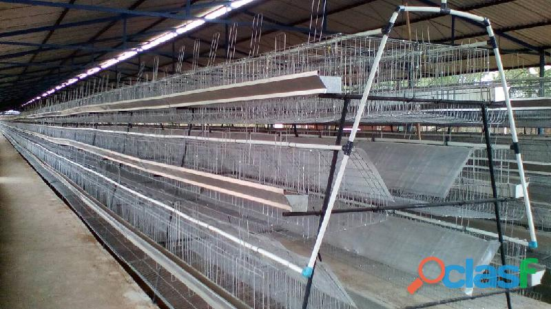 fabrica de jaulas para gallinas ponedoras y gallos 1