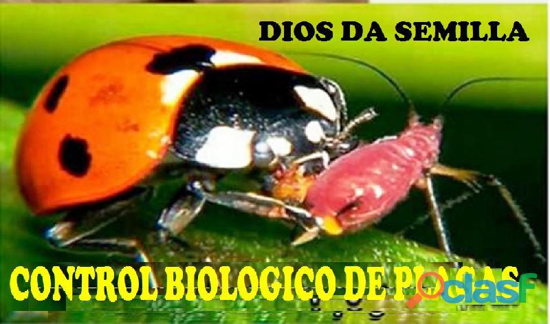 ANALISIS DE SUELO CON FINES AGRICOLAS 04169522822 DIOS DA SEMILLA 1