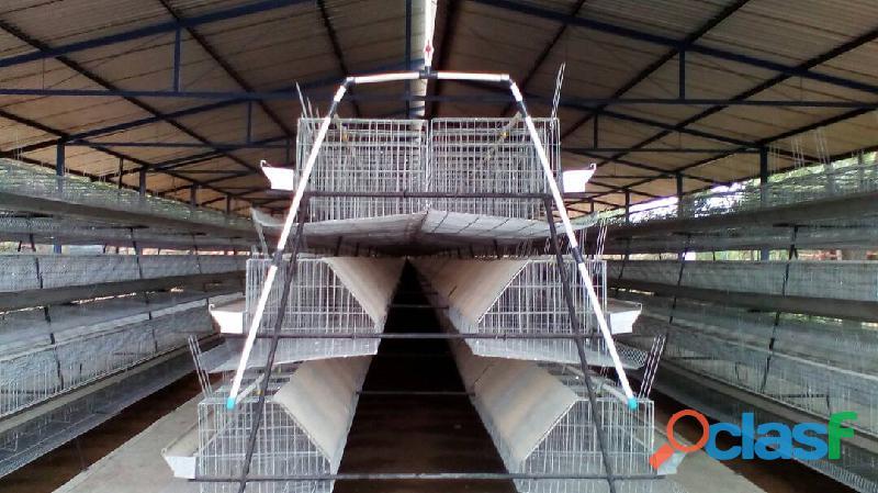 Fabrica de jaulas para gallinas ponedoras y gallos