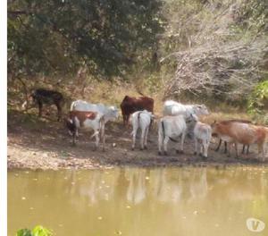 Venta De Finca En Ortiz Guarico Rancho La Enramada