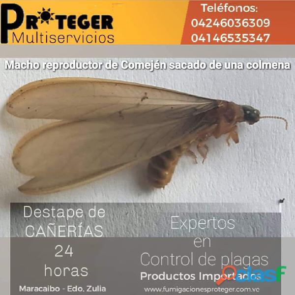 Multiservicios Proteger Servicio de Plomeria.