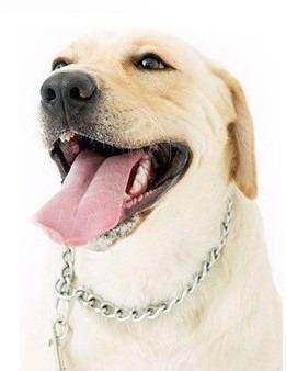 Collar de adiestramiento para perros grandes 3.0mm x 50cm