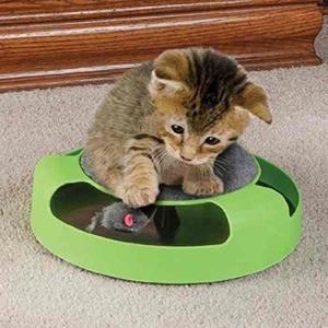 Fuente animal domestico gato plastico atrapar raton placa