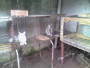 Vendo coneja nueva zelanda para reproduccion