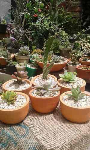 Arreglitos y recuerdos de cactussuculentas
