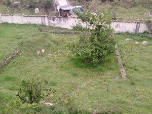 Ikasa vende terreno vía mucunutan tabay