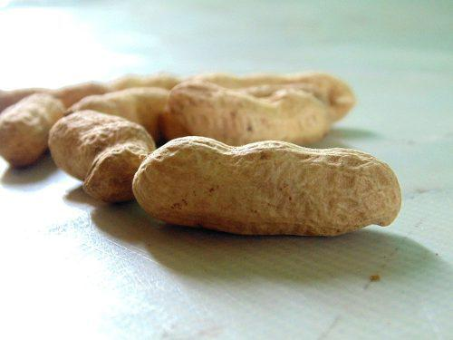 Semilla de mani o cacahuate sobre de 100 semillas