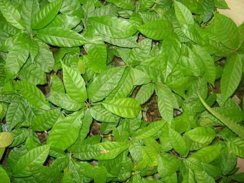 Plantulas- plantas