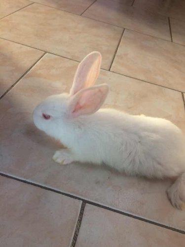 Conejos reproductores para pie de cria venta pdf manual