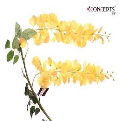 Spineto,orquídea Amarilla