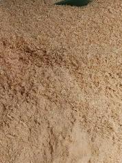 Aserrin de pino sustituto de arena de gato