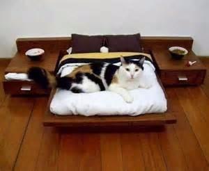 Cama para gato con mesita de noche