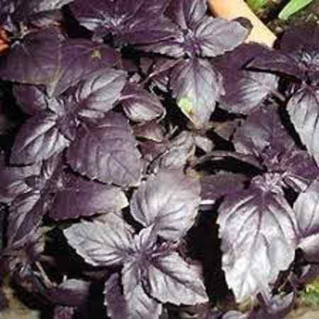 Chef 12 sobres semillas plantas culinarias aromaticas