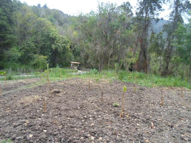 Rafabienes c.a vende terreno de 5000 mts sector san isidro