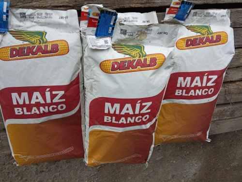 Semilla de maiz blanco certificada oferta x esta semana 50
