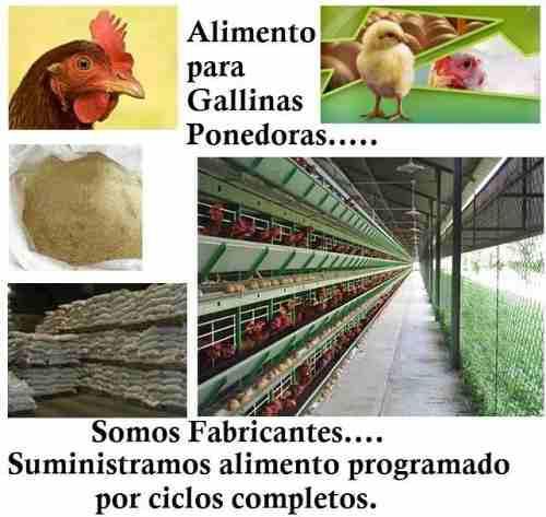 Alimentos balanceado para animales