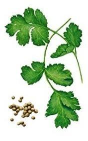 Semillas de cilantro westar sobres 5 gr con guia de cultivo