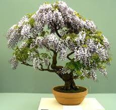 Como hacer su propio bonsai decora tu casa o apartamento