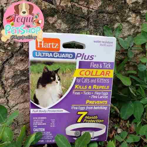 Collar Anti Pulgas Anti Garrapatas Para Gatos