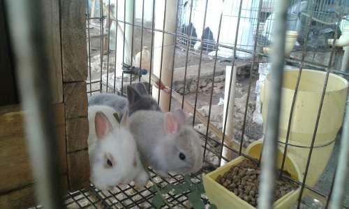 Guia conejos