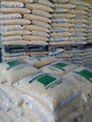 Semillas certificadas de maíz amarillo