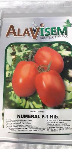Semillas tomate numeral f-1 híbridas certificadas