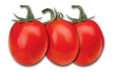 Semillas tomate rio grande sobre 5 gramos guia de cultivo