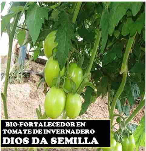 Bio-fortalecedor dios da semilla triple 15 npk fertilizante