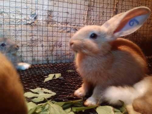 Pdf guia conejos mascotas o pie de cria