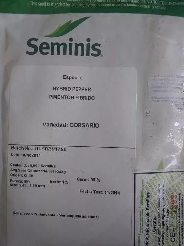 Semilla de pimenton magistral corsario tomate drd hibrido