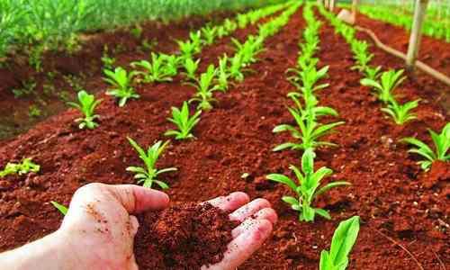 Analisis de fertilidad de suelos para usos agricolas