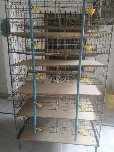 Bebederos y comederos.de codornices capac 250 aves