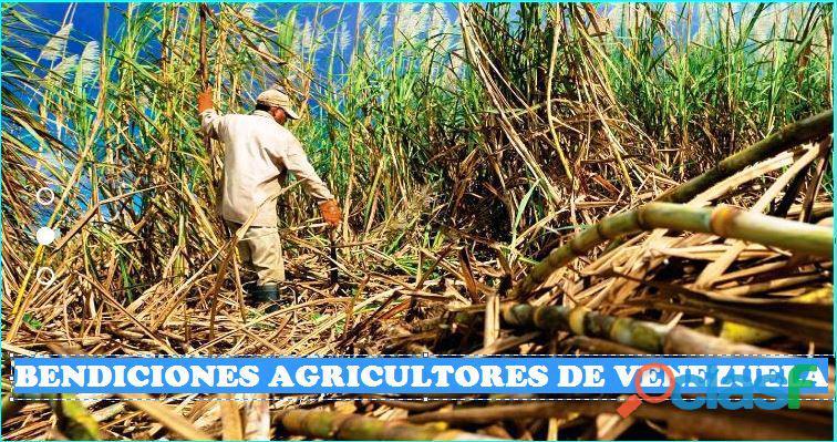 ANALISIS DE SUELO CON FINES AGRICOLAS 04169522822 DIOS DA SEMILLA