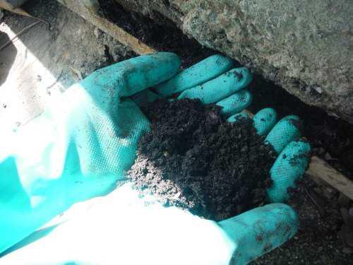 Sustrato, compost, abono especial germinación de plantas