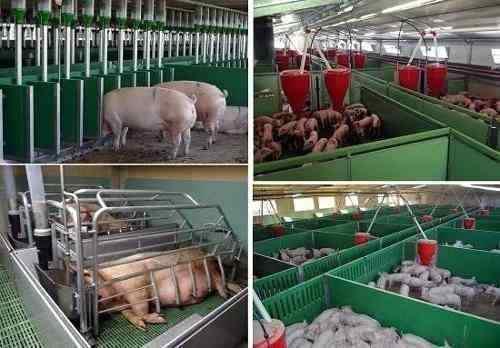 Kit aprende cría porcina cerdos corrales instalaciones