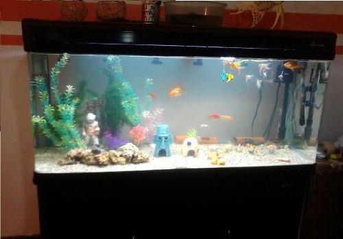 Mueble acuario dos gabinetes con vidrio templado curvo