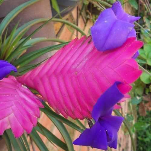 Plantas ornamentales naturales jardín decoración
