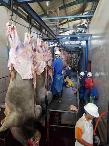 Venta de carne de res en canal 1.32 el kilo en adelante