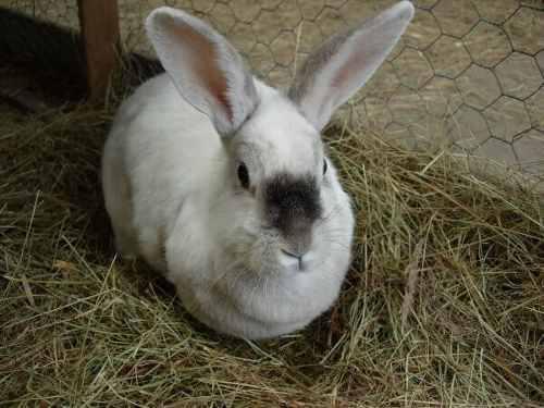 Cria de conejos, manuales guias instalaciones, alimentación