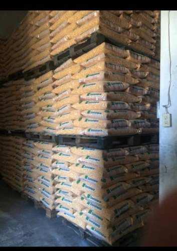 Semillas certificadas de maíz