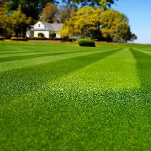 Semillas de grama bermuda cesped clima calido 1 libra