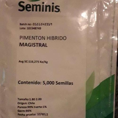 Semillas de pimentón híbrido (seminis) magistral