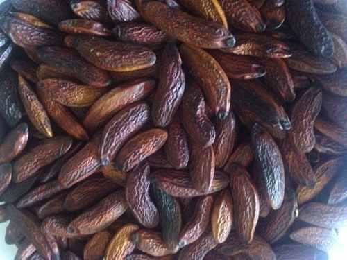 Semillas De Sarrapia (01 Kg.)