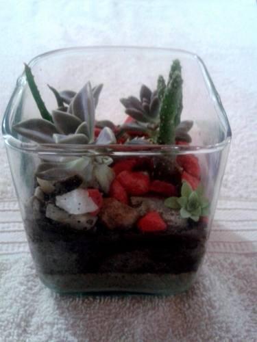 Terrario Cactus Suculentas