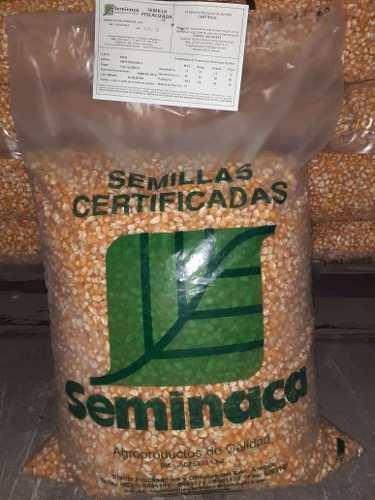 Semillas de maiz certificadas