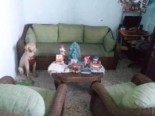Juego de muebles de mimbre sofa cama 380v