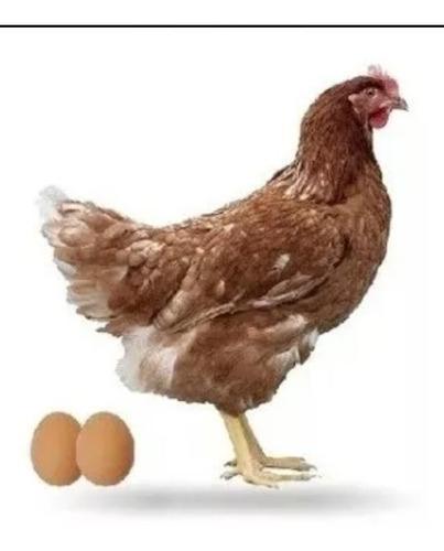 Alimentos para gallinas ponedoras 15 verdes marca seravian