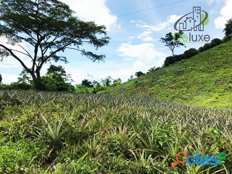 Bella finca con 29.6 hectáreas en Tucaní 9
