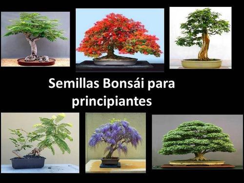 Combo semillas bonsai para principiantes +obsequio
