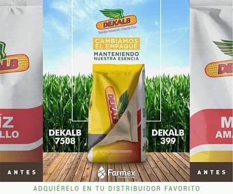 Semillas Maiz Amarillo Y Blanco